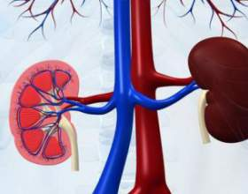 Як зберегти здоров`я нирок? фото