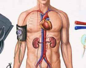 Нирковий тиск: симптоми і лікування фото