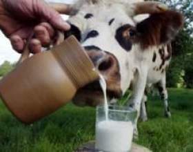 """Чому грудне молоко і стафілокок несумісні С""""РѕС'Рѕ"""