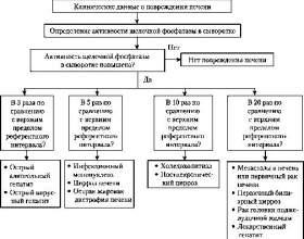У-глутаміл транспептидаза в сироватці кроⳠфото